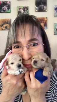 Gracie's Puppies 2 wks old