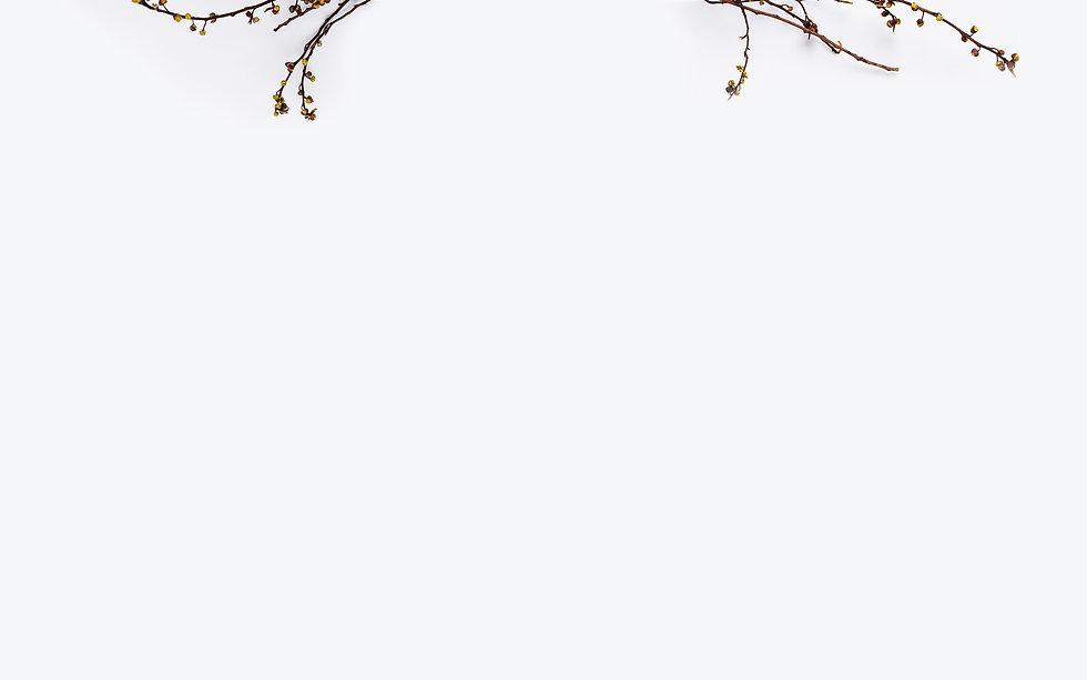 dried_plants.jpg