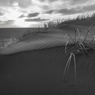 Whatipu sand dunes_marram grass.jpg