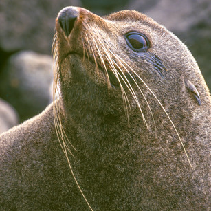 Seal SD30_USM250_G5 2.jpg