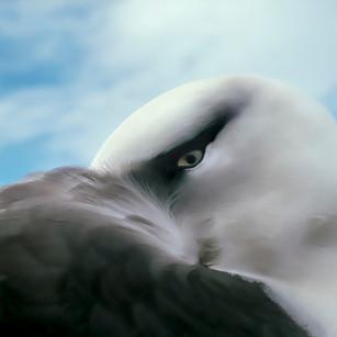 A47-D47-Albatross BB waking CI_v2_6014_J