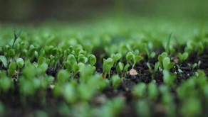 The Soil Food Web, Archaea & the Origin of Earth
