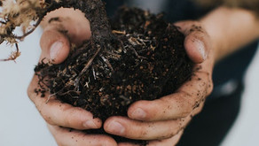 Everything You Need To Know About Home Composting