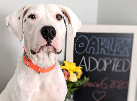 Dog Trainer Vs Dog Consultant