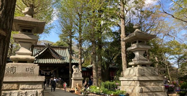 金村別雷神社_210415_21.jpg