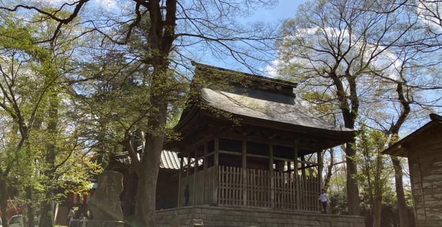金村別雷神社_210415_46.jpg