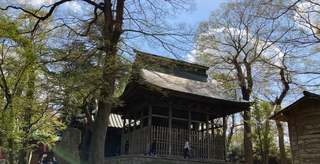 金村別雷神社_210415_45.jpg