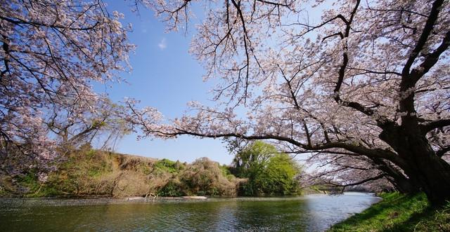 福岡堰.jpg