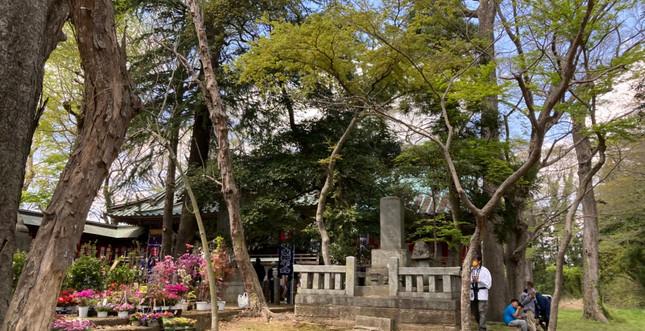 金村別雷神社_210415_42.jpg