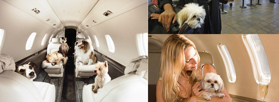 Private Jet and pets