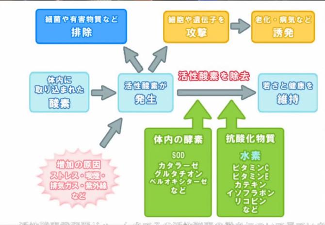 抗酸化物質と抗酸化酵素