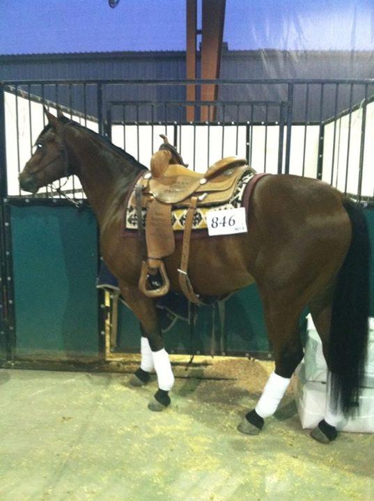 Season Your Performance Horse