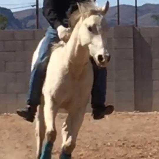Western Horse & Gun Productions  Following FURY !