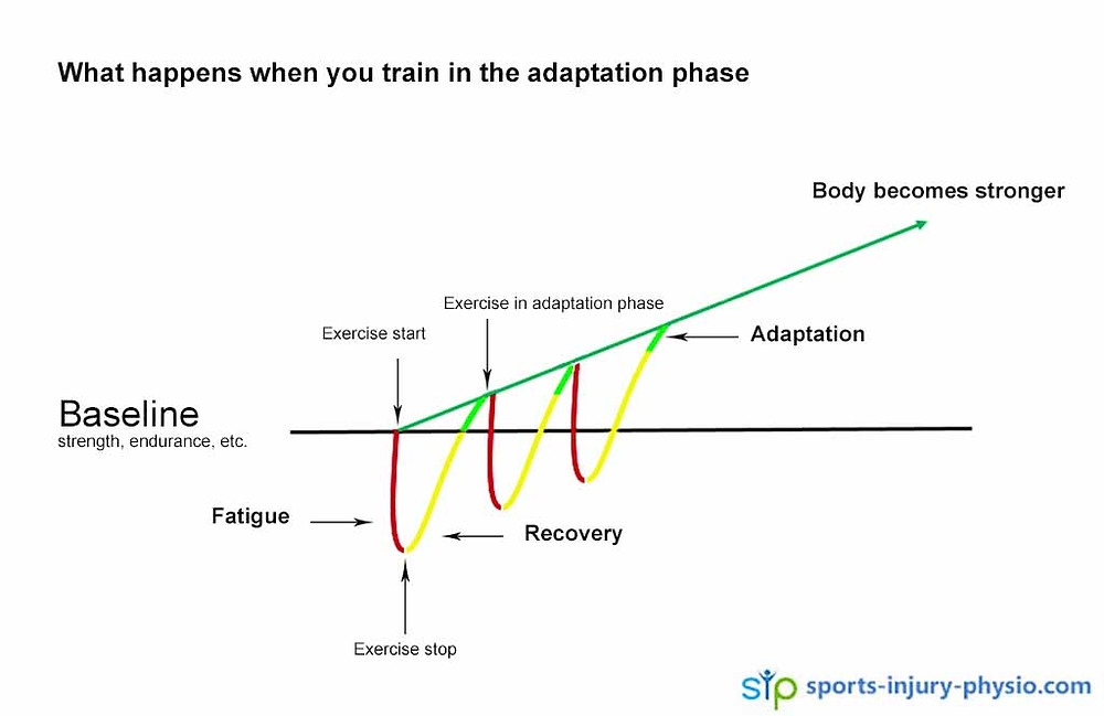 Your body becomes stronger if you allow enough recovery time after exercise for it to repair all the exercise induced damage.