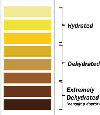 Use the standardized urine chart to see if you may be dehydrated