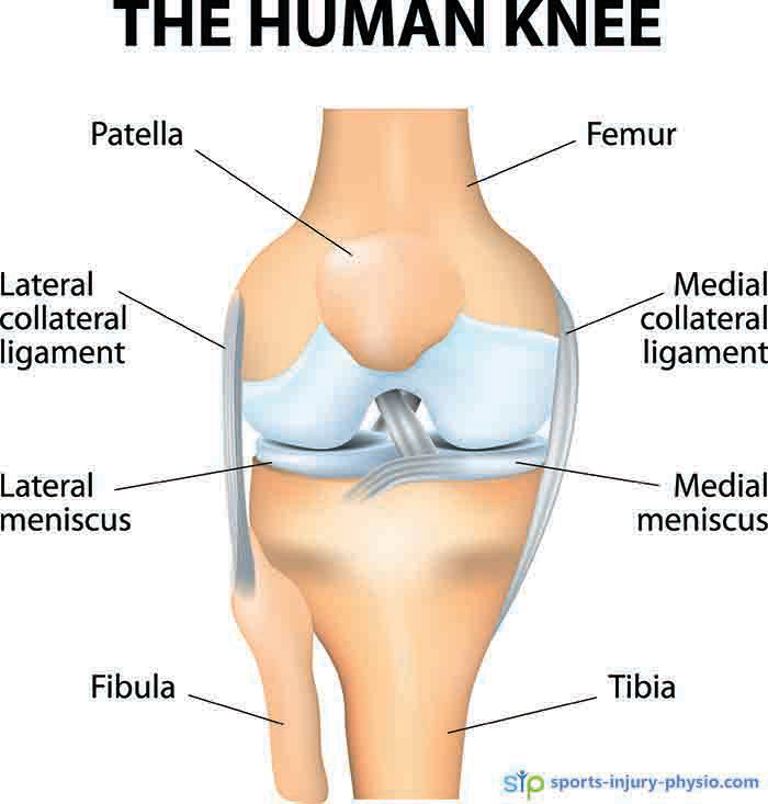 The anatomy of the knee joint.