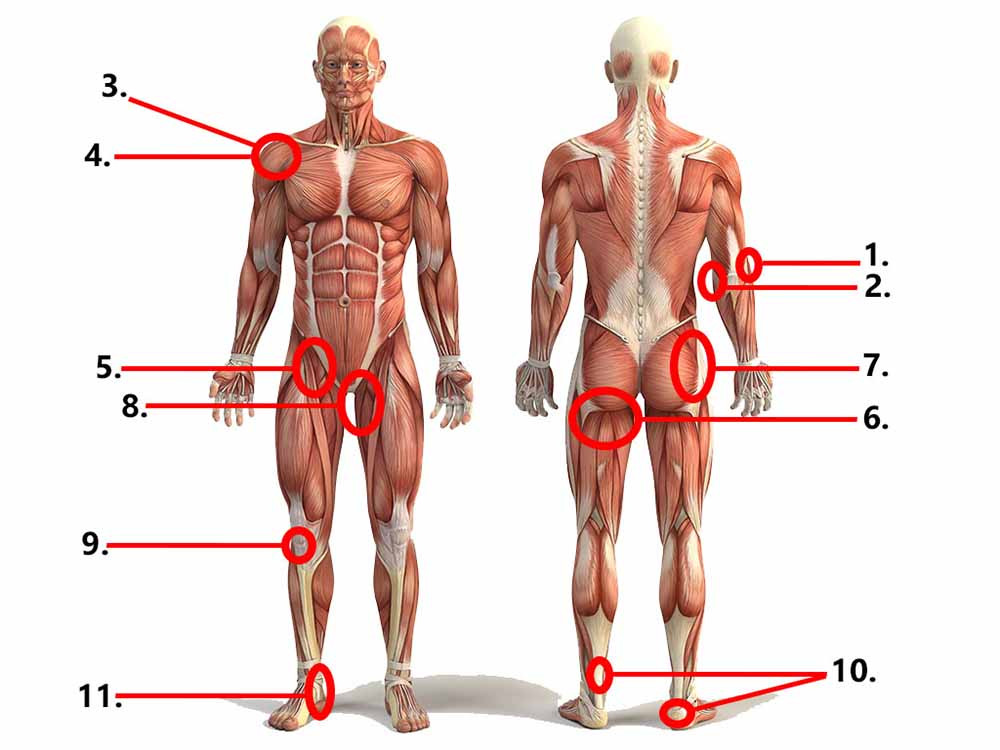 The most common areas of the body to develop tendon pain.