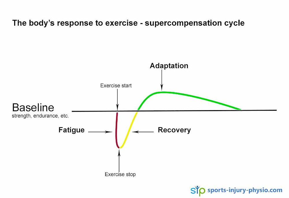 The body sustains micro tears during exercise and needs enough recovery time to rebuild itself stronger. This cycle is called the supercompensation cycle.