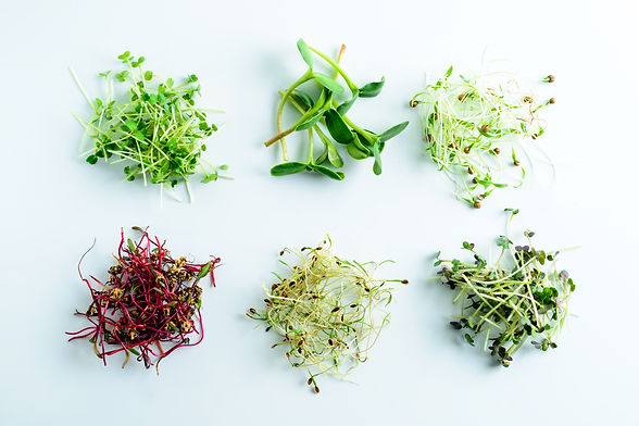 microgreens grown in Sydney from sustainable resources