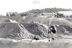 Dirt+17
