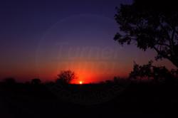Sunset Treeline.jpg