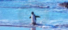 PenguinSingle.jpg