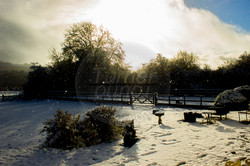 Snowy Garden.jpg