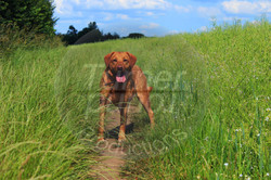 DogHolly.jpg
