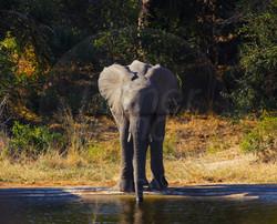 Elephant Baby_.jpg