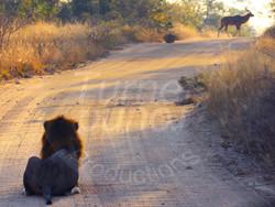 Lion Hunt.jpg
