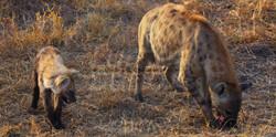 Hyena Baby Look.jpg