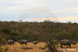 Rhino Wide.jpg