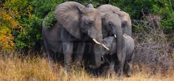 Elephant Emerge 2.jpg
