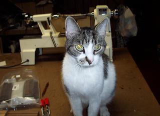 Rocky the Killah Shop Kitteh  April 2000 - July 2016