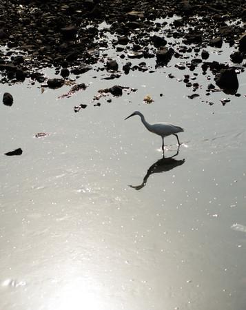 bird-3.jpg