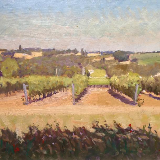 Vines near Ste-Foy-la-Grande