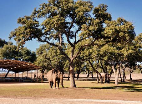 Texas Hill Country: Canyon Lake, The Preserve, & San Antonio
