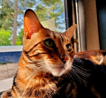 A&A Traveling Full-Time With 2 Bengal Cats