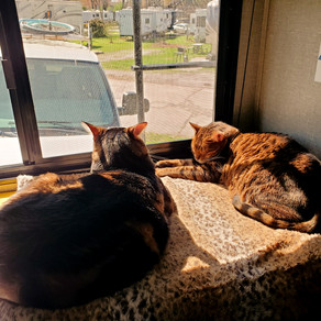 A&A Traveling Across The Country With 2 Bengal Cats   RV Living