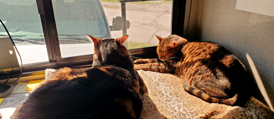 A&A Traveling Across The Country With 2 Bengal Cats | RV Living