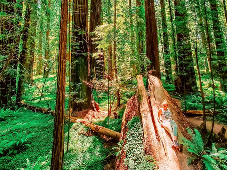 A&A As 'Stewards Of The Redwood Forest' In Northern California