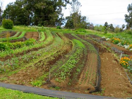 4 Benefits of Contour Farming