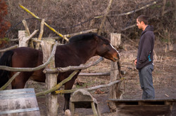 trevor with horse