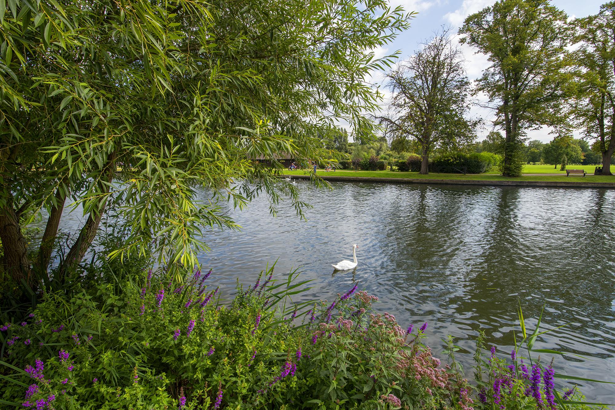 swan in stratford