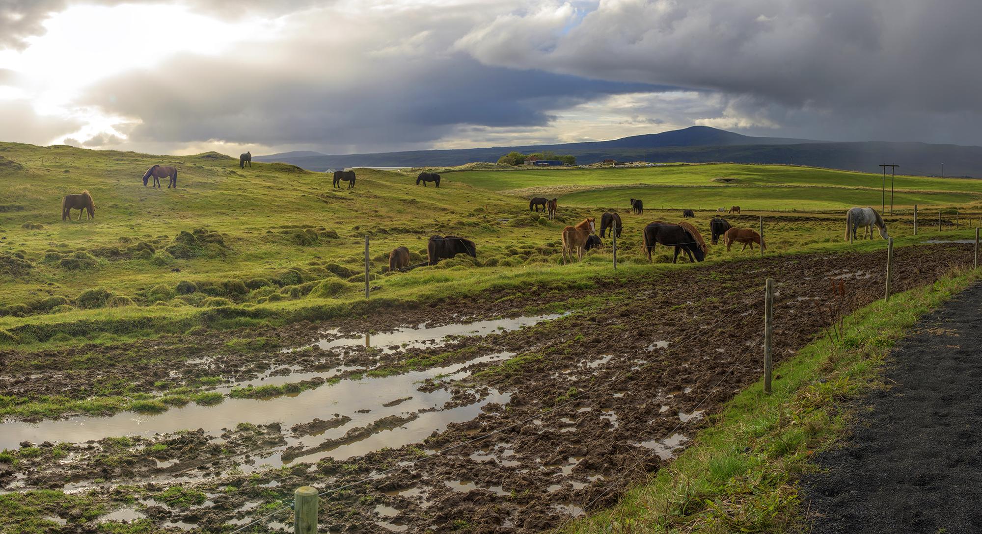 icelandic horse ranch