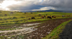 icelandic horse ranch