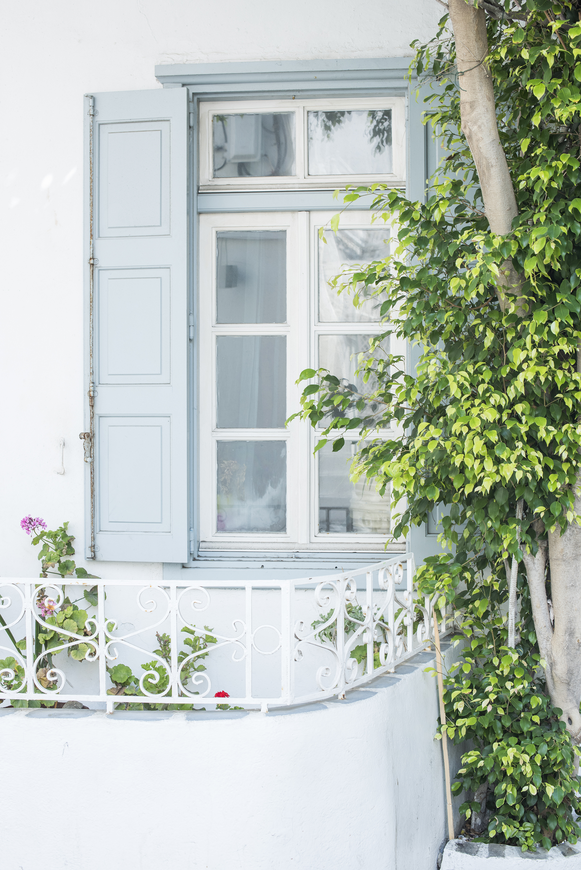 vine on the window