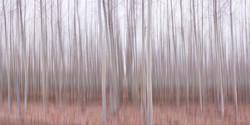 Pastel Grove