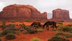 MONUMENT VALLEY WILD HORSES