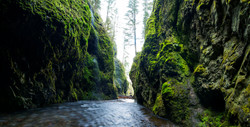 oneonta gorge pano looking back